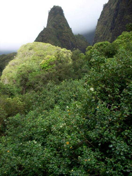 iao valley, iao needle, kukaemoku, maui, aavtravel, hawaii