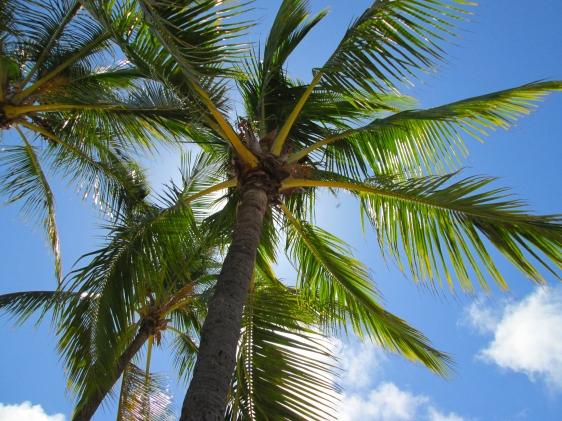 poipu beach, palmtree, kauai, aavtravel