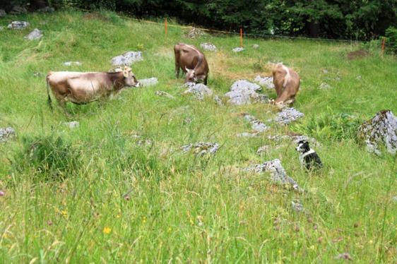ebenalp, appenzell, alpstein, aavtravel, switzerland