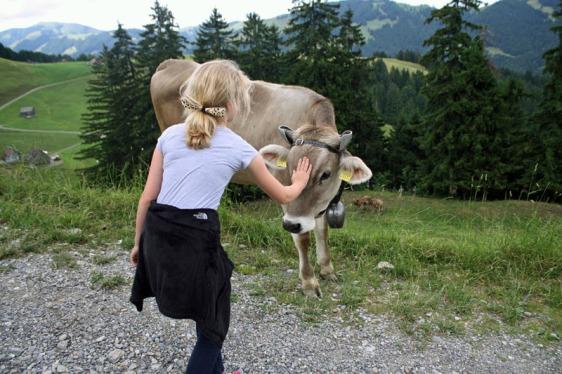 ebenalp, appenzell, alpstein, aavtravel, switzerland, cow