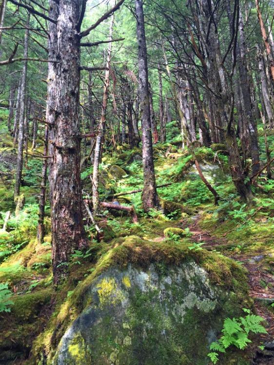 perseverance trail, juneau, alaska, aavtravel