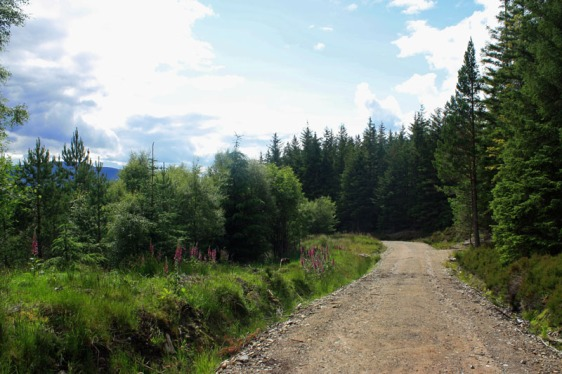 cairngorms, scotland, glenmore, aviemore, hiking, aavtravel