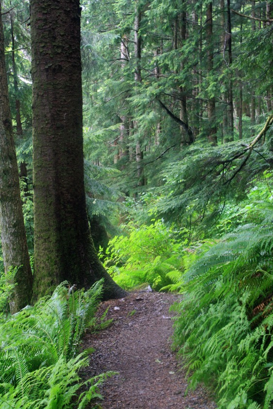 ketchikan, rainbird trail, alaska, hiking, aavtravel