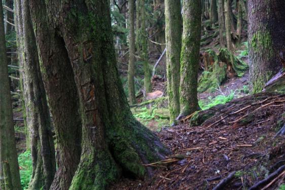 ketchikan, rainbird trail, alaska, hiking, aavtravel, reindeer