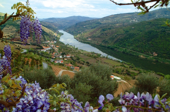 wisteria_douro_river_valley