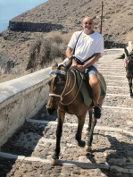 Mules in Fira