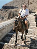 Mules in Fira